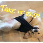 噛む噛む噛む・・!〔生後3ヶ月〕ゴールデン・レトリーバー子犬成長記録