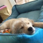 どんな大型犬ベッドが好み?基本5タイプのまとめ