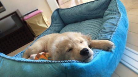 4月15日/113日目 大型犬・子犬ベッド