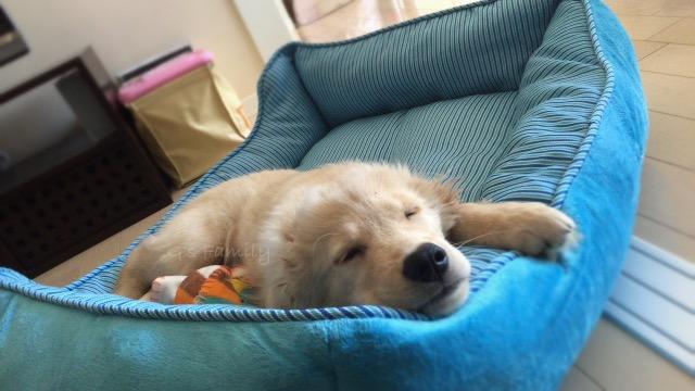 4月15日 113日目 大型犬・子犬ベッド