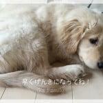 子犬が下痢をする原因は何?自宅でできる対処法は?