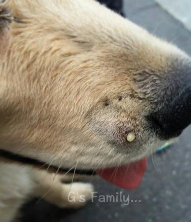 犬に噛まれた傷