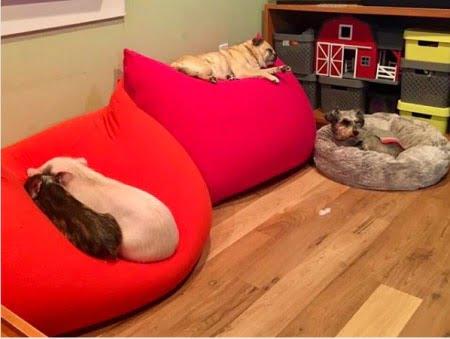 ヨギボーと犬