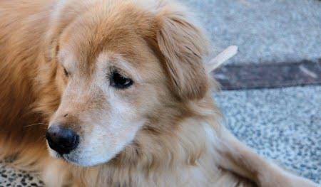 里親 福岡 子犬