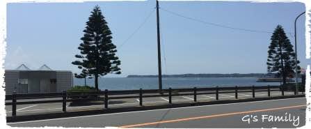 三浦海岸 犬連れ