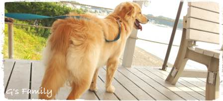 beachbumウッドデッキ 犬可