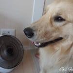 【犬の暑さ対策】暑がりゴールデン・レトリーバーに必須のサーキュレーター!