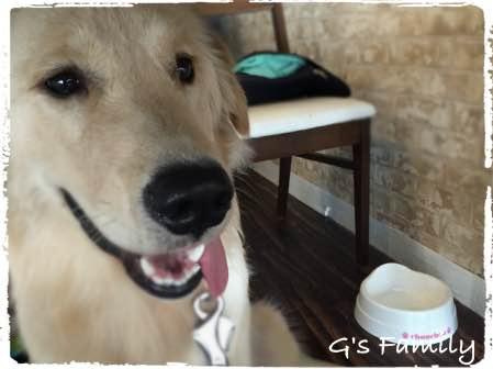 三浦海岸ドッグカフェ ブルームーン 犬