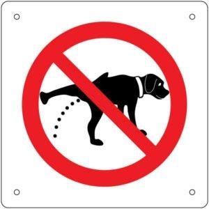 犬 トイレトレーニング