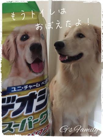 トイレトレーニング子犬