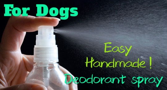 犬の消臭スプレー