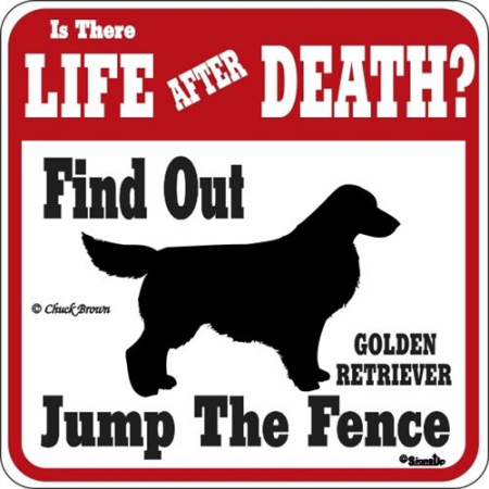 LIFE AFTER DEATH GOLDEN RETRIEVER
