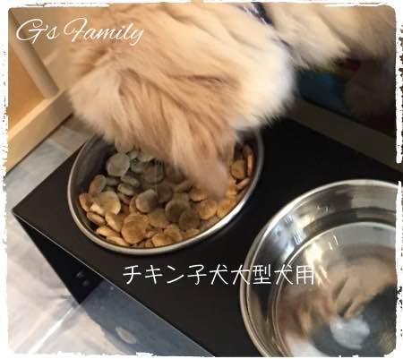 ニュートロナチュラルチョイスチキン玄米子犬大型犬用