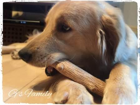 犬の甘噛み対策ウッディ ジャイアントスティック
