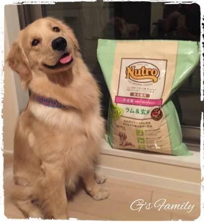 ニュートロ ラム&玄米 子犬