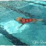 プール好きの犬にはたまらない「山中湖ドッグリゾートWoof(ワフ)」に日帰り旅行してきた。