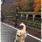 ホテル凛香リゾート箱根強羅。 〜犬と泊まれて、温泉があるお宿〜[犬連れ旅行]