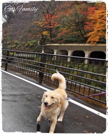 犬旅行・ホテル凛香箱根強羅