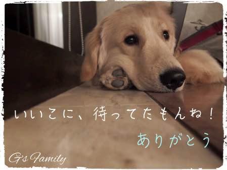 ホテル凛香 箱根強羅 誕生日 犬