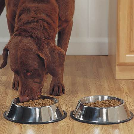 ステンレス製 犬 食器