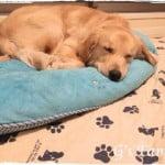 [大型犬子犬が使うリバーシブルベッド]1年使った感想まとめ。壊れたり修理したり丸洗いしたり!