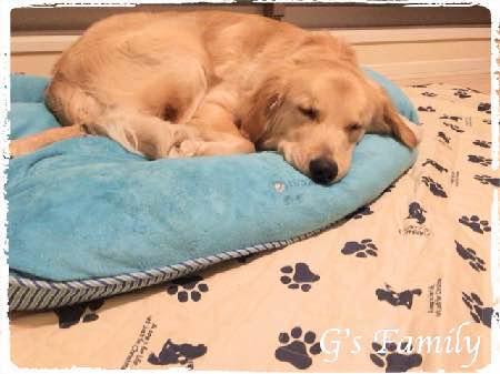 大型犬ベッド 生後11ヶ月