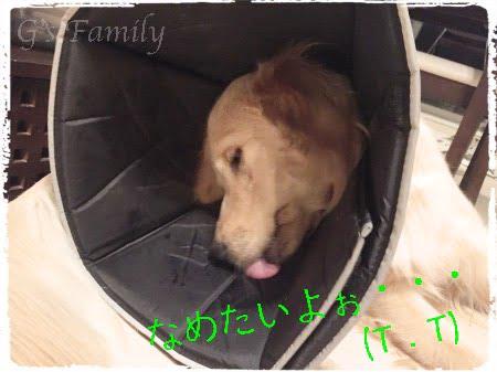 コンフィーコーン 大型犬