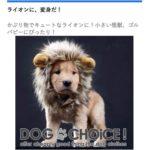 話題のAmazonプライムCMで、ゴールデン・レトリーバーが着用しているライオンウィッグ!