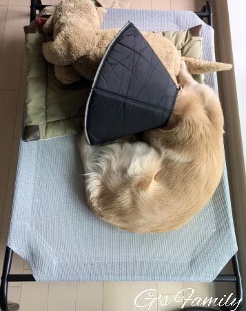 ドッグコット型ベッド大型犬用