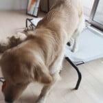 大型犬ドッグコット型ベッド使い心地・お手入れなど!【使用2ヶ月後のレビュー】