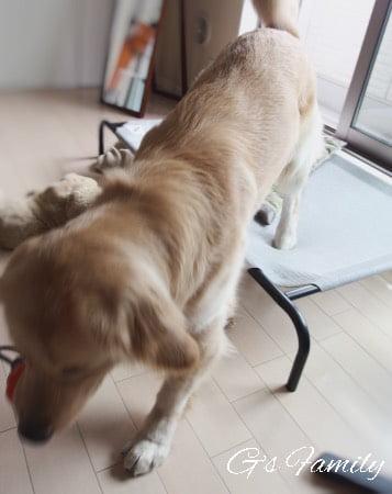 大型犬用ドッグコット