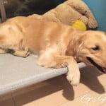 暑い夏にぴったり、ドッグコット型・大型犬用ベッドに決めた!