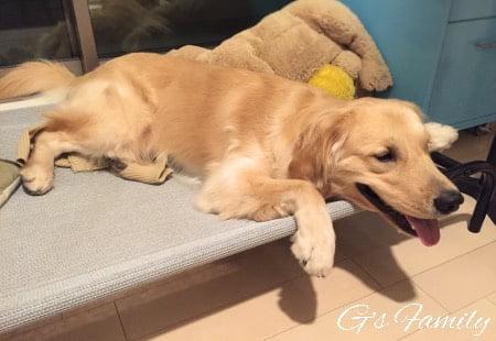 大型犬ベッドドッグコットレビュー1