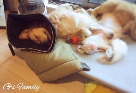 大型犬用ドッグコットベッド