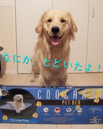 coolaroo大型犬用ドッグベッド
