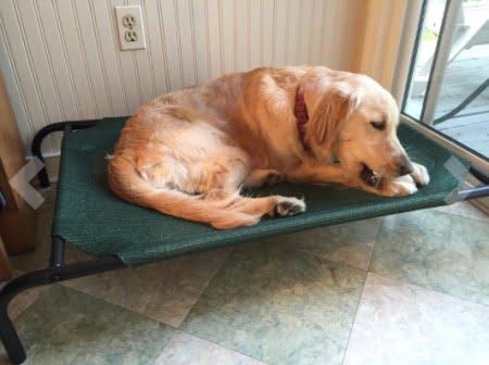 大型犬ドッグベッド