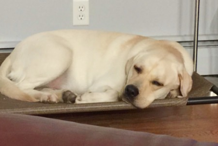 大型犬ドッグコット