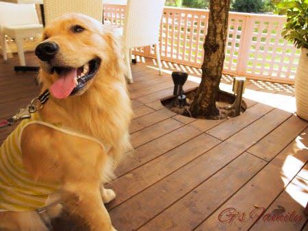 小谷流の里ベーカリーショップ犬