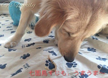 犬のおやつ・国産・無添加オーシーファーム