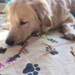 [国産・無添加]安心の犬おやつ。人気のオーシーファームを試しました。