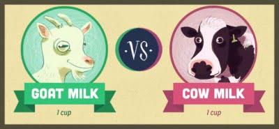 ゴートミルクと牛乳