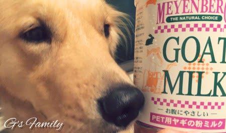 ゴートミルク犬メインバーグ
