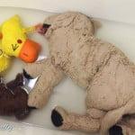 犬のぬいぐるみおもちゃ、重曹・クエン酸で安心安全お洗濯