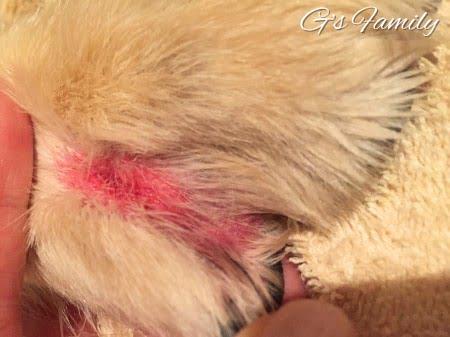 犬の指間炎20160712