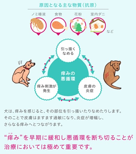 犬のアトピー性皮膚炎アポキル錠