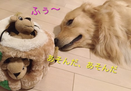 犬のぬいぐるみおもちゃ知育