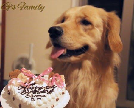 セナ2歳の誕生日