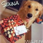 Happy Birth Day!!! 犬用の誕生日ケーキで、お祝いを![2歳の誕生日]