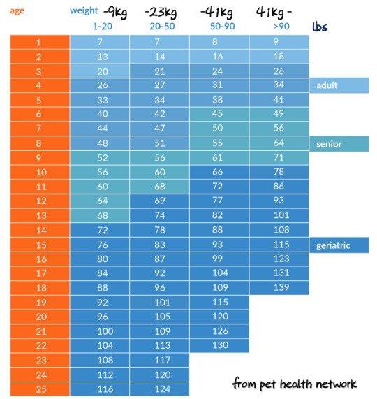 犬の年齢換算表