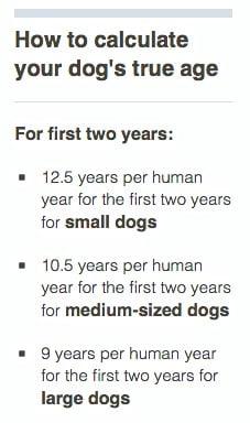 最新犬種別の年齢換算表